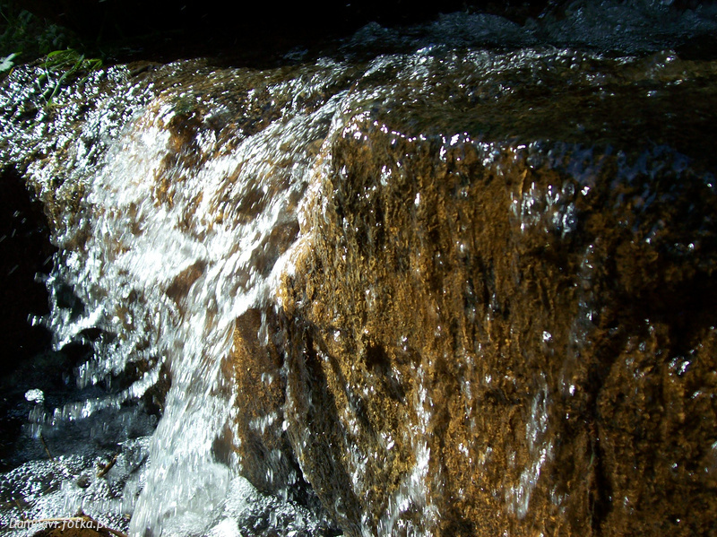 Elbląska przyroda - Elbląg - zdjęcie 2