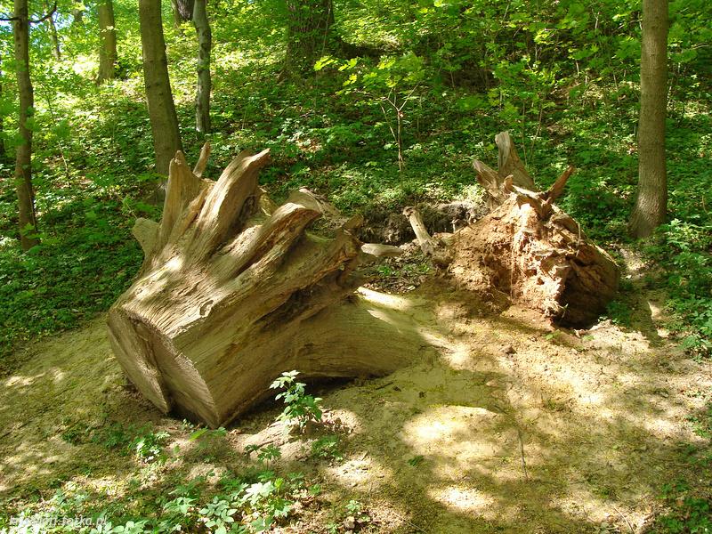 Elbląska przyroda - Elbląg - zdjęcie 7