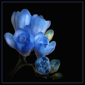 Ulubione kwiaty i takie co wam się podobają