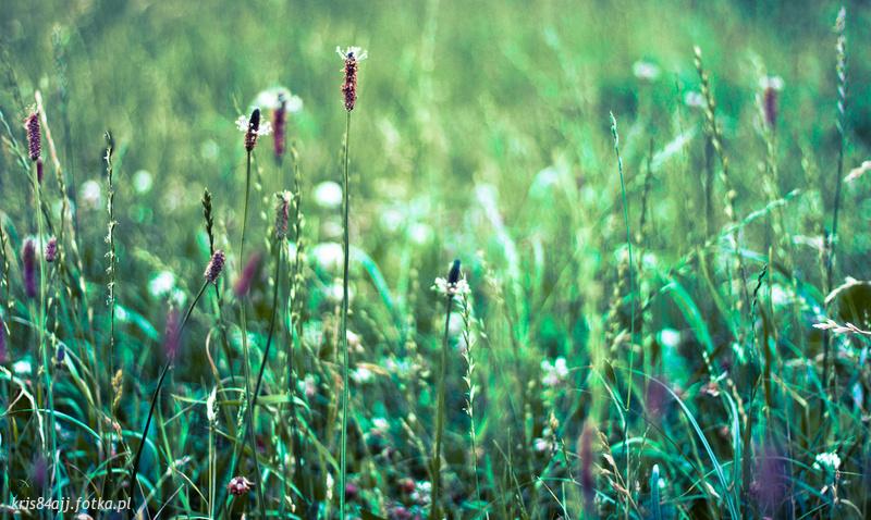 Elbląska przyroda - Elbląg - zdjęcie 12