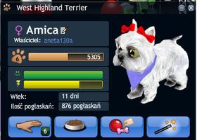 Zwierzak: konkurs