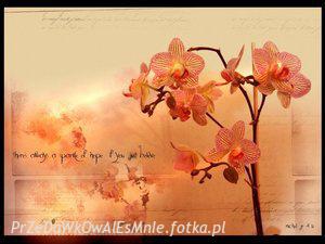 Obrazki na Bloga ;] - Chemiczny świat, pachnący szarością. - zdjęcie 80