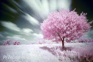 Obrazki na Bloga ;] - Chemiczny świat, pachnący szarością. - zdjęcie 82