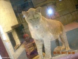 Puma randki Kanada