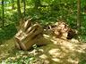 Elbląska przyroda - Elbląg - zdjęcie 24222631