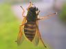 Elbląska przyroda - Elbląg - zdjęcie 24234132