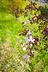 Elbląska przyroda - Elbląg - zdjęcie 50657003