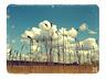 Obrazki na Bloga ;] - Chemiczny świat, pachnący szarością. - zdjęcie 70317111